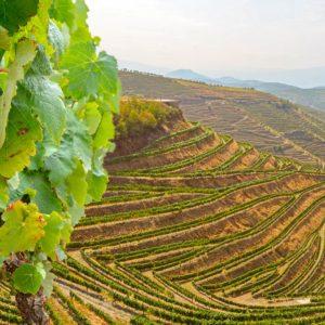 Esperienza: La viticoltura nei Terrazzamenti